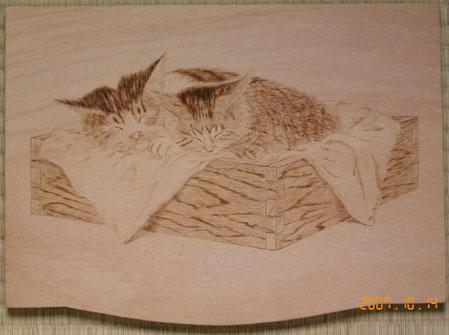 wb_cat.jpg